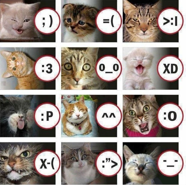 gatti-emoticons